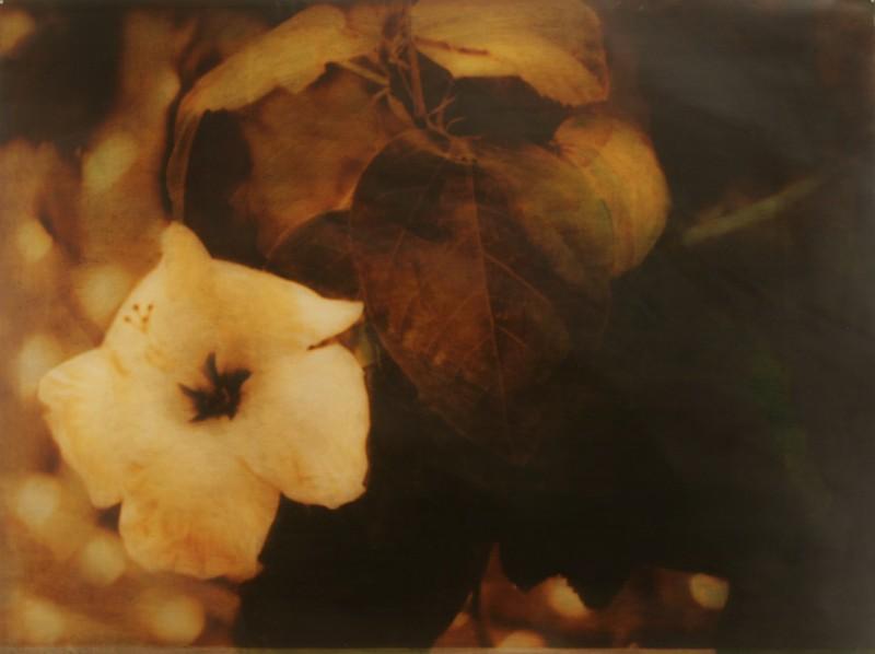 Fragment, Sarah Nind, 1996